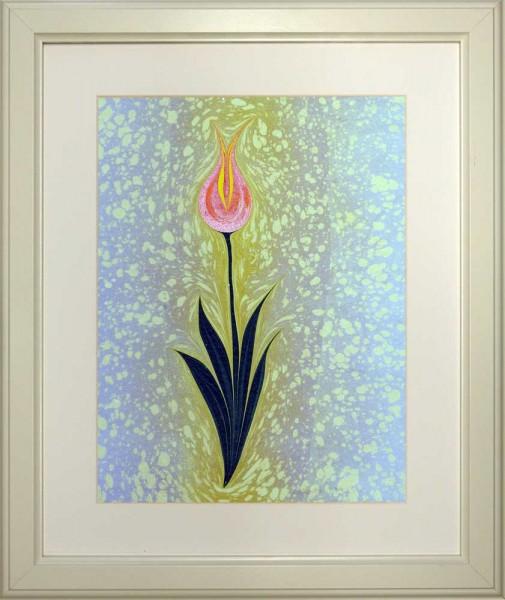 Tulpe 509