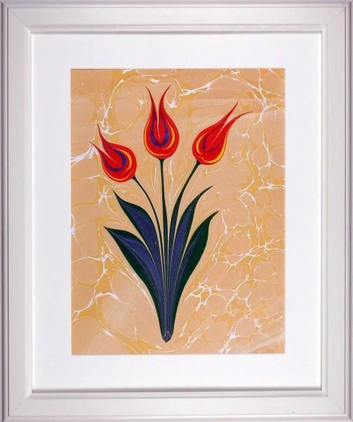 Tulpe 501