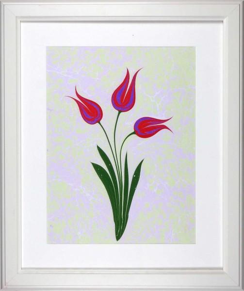 Tulpe 507