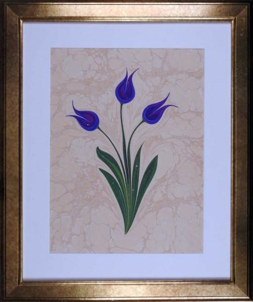 Tulpe 505