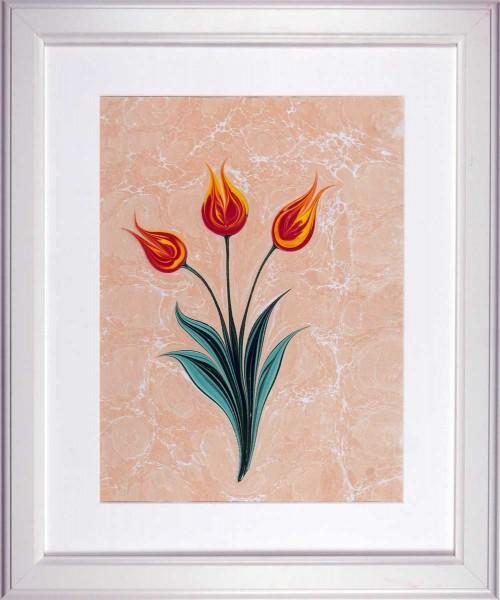 Tulpe 502