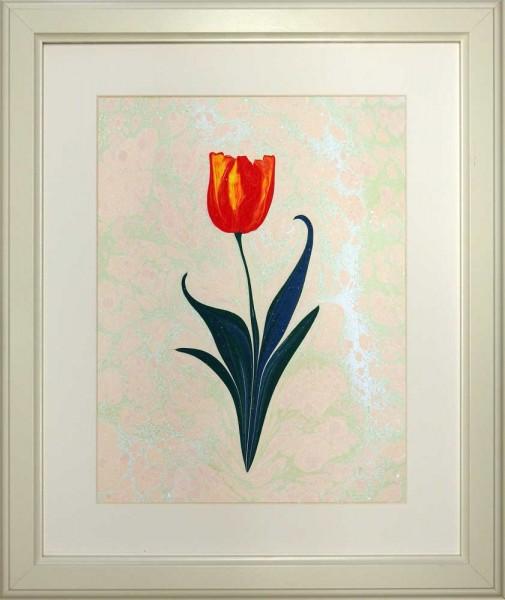 Tulpe 504