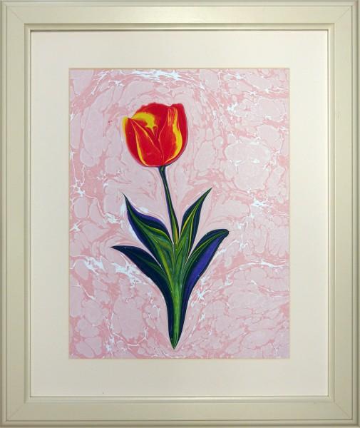 Tulpe 511
